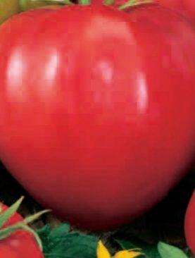 Tomate Sweetheart Inima de Bou