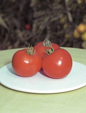 Tomate Polfast F1 - Plic 5 grame